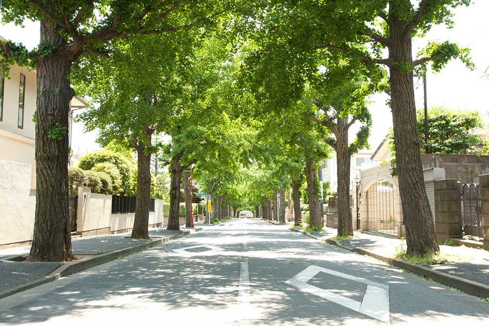建築基準法条の道路